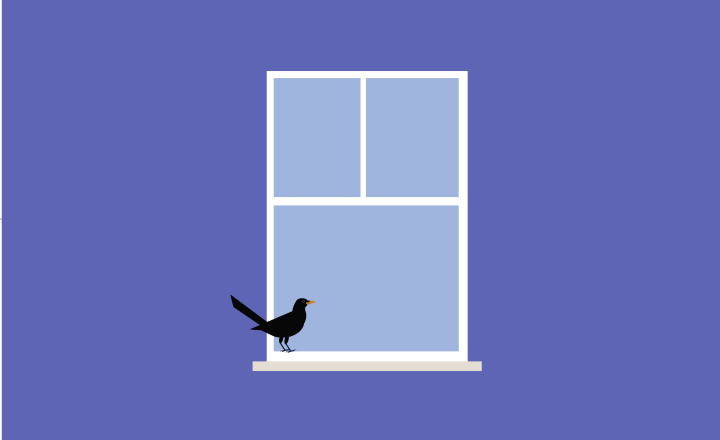Illustration of a small black bird sitting on a window sill